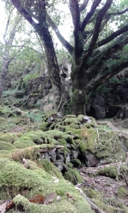 Along the walk to Dinas Emrys